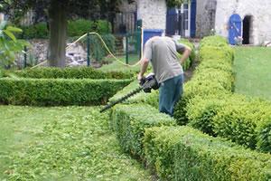 Taille arbres et arbustes le lys gouvieux par paysagiste jardinier - Quand tailler les arbres et arbustes ...